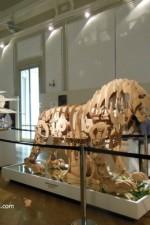 leone meccanico tips