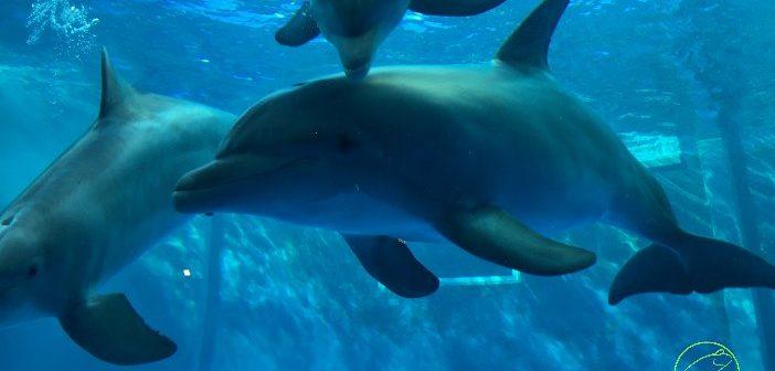 Genoa: how to organise a trip to the Aquarium